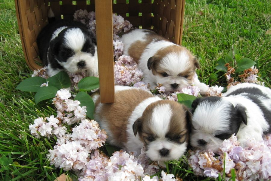 Il 20 maggio sono nati 4 piccoli cucciolini..
