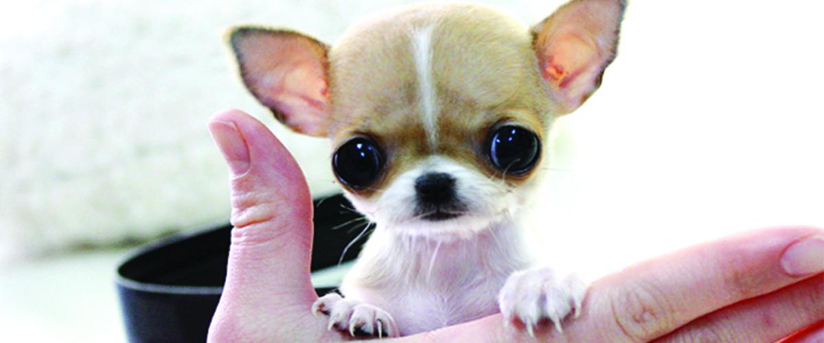 Pensione per cani taglia piccola il melograno centro for Nomi per cani taglia piccola